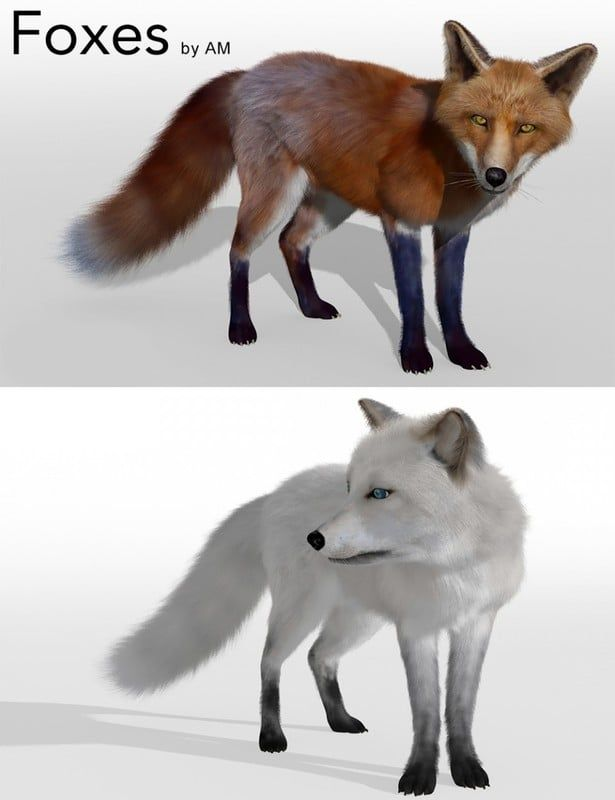 https://zonegfx.com/foxes-by-am/