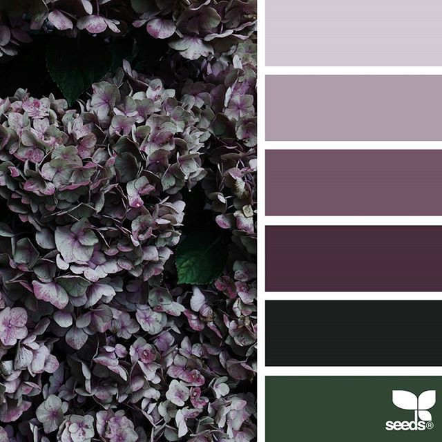 today's inspiration image for { flora tones } is by @mijn.grid ... thank you, Sisilia, for another incredible #SeedsColor image share!