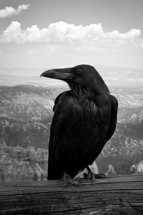 (via Black Autumn Mourning). Black bird waits.