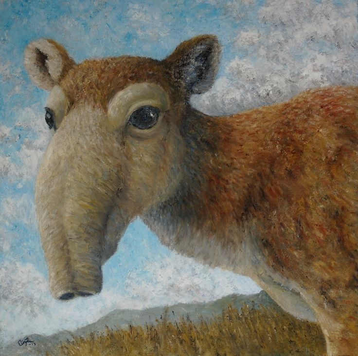 Saiga Antelope (Saiga tatarica). Oil on canvas 2017. 50x50cm. #saiga #antelope #endangered #art #wildlifeart #painting