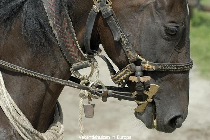 Vakantie in Hongarije betekent voor de paardenliefhebber het ultieme!!!   http://www.vakantiehuizen-in-europa.nl/