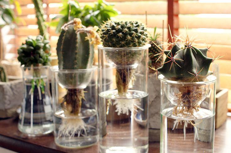 http://www.hydroponic-culture.com/