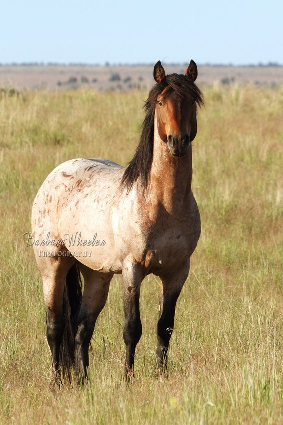 South Steens Wild Horses B118445 Absolute Perfection