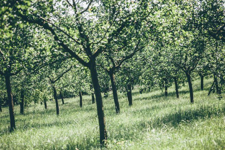 Kde sbírat čerstvé ovoce zdarma