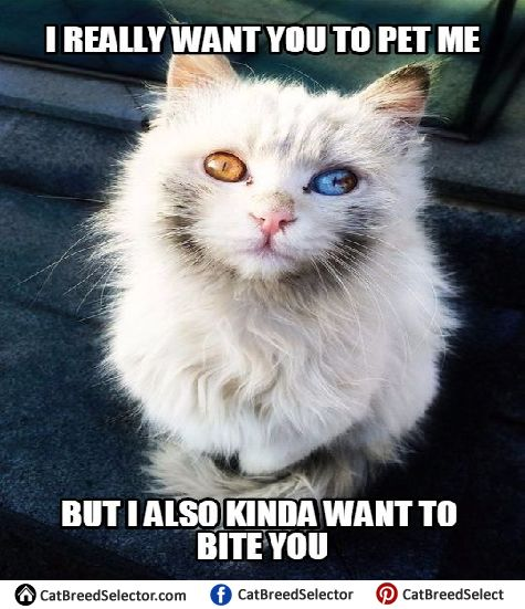 Funny White Cat Meme : Best funny cute angry grumpy cats memes images on