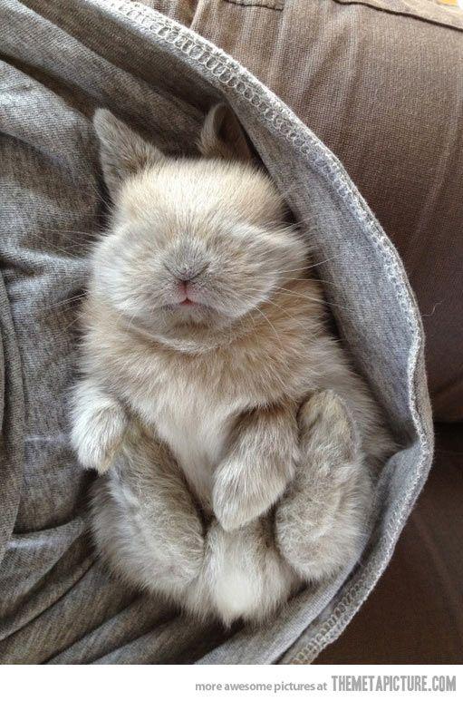 Sleepy baby bunny…