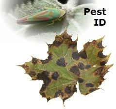 Plant pests and diseases identification pdf