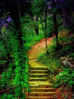 Download Free Beautiful Stairs Way Mobile Wallpaper Contributed By Nathen