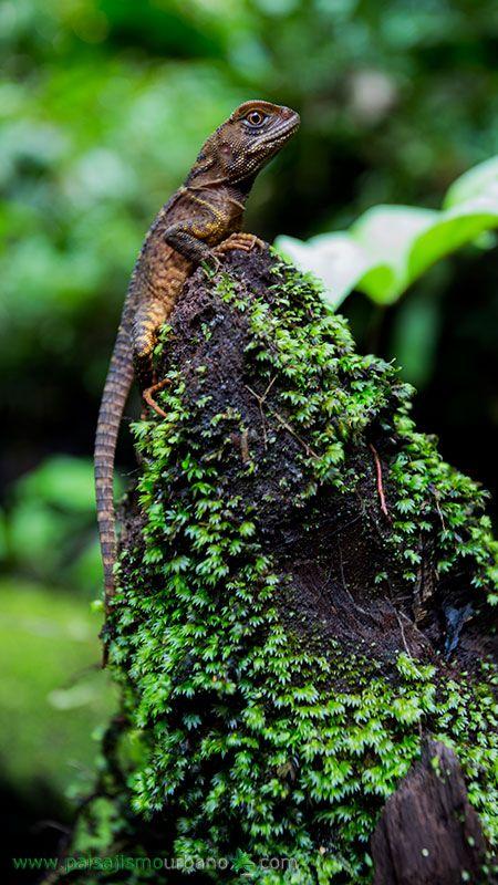 Expedición del equipo de Paisajismo Urbano a las Selvas del Chocó, Colombia