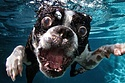 Underwater Dogs Are Adorably Terrifying