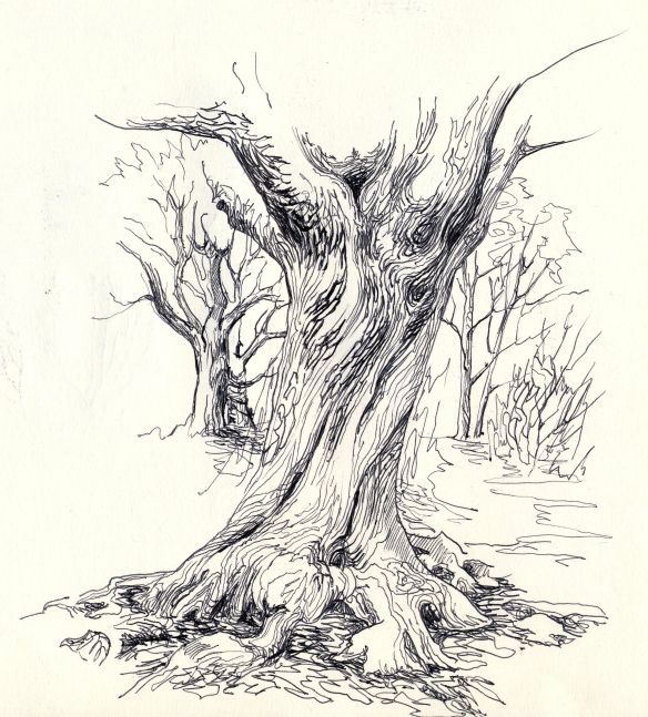 Hollow Tree Trunk Sketch - Google Search