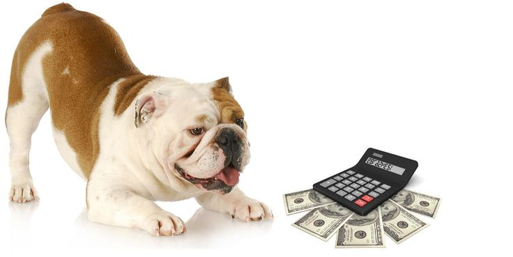 Click The Picture To Find Out What You Need To Know About Dog Sitting Rates