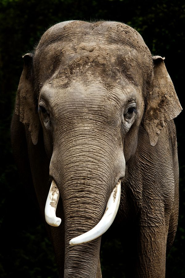 Elephant -- by Ander Aguirre  ~ When you think a positive thought, you become positive, so think now. ~
