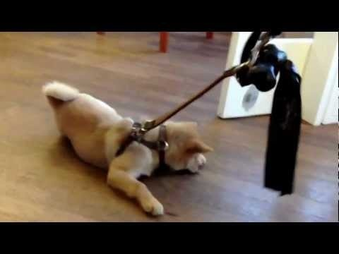 puppy at work wont go for a walk