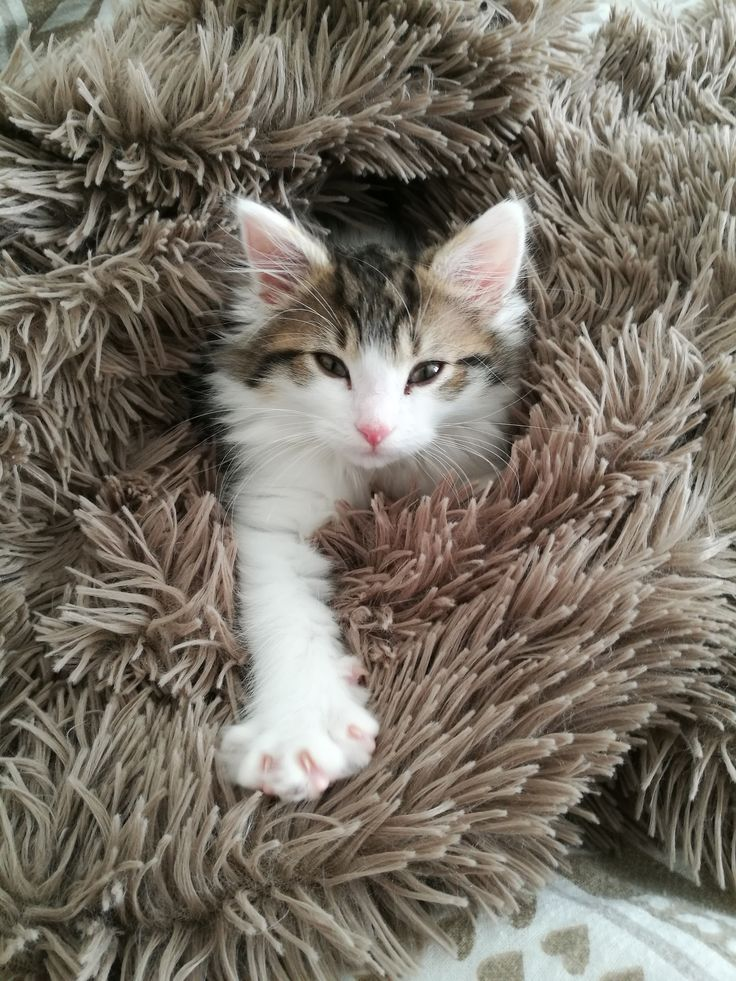 Help! I'm trapped in the rug!
