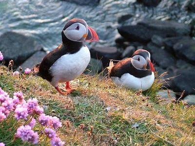手机壳定制air jordan  high strap premier one pinner said  Favorite place to visit in Scotland  Orkney Islands Reason Puffins