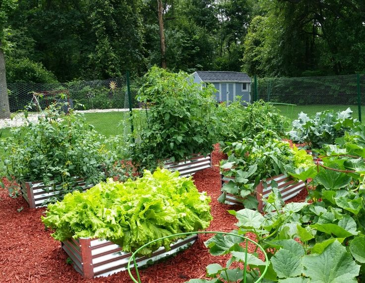 1000 images about raised garden on Pinterest Gardens Raised