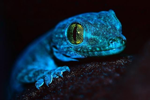 Beautiful blue lizard!