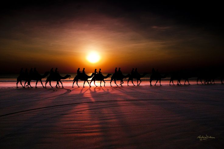 "Camels at Sunset. Cable Beach, Broome.  500px / Photo ""Shadow camels"" by Lord Veritas"