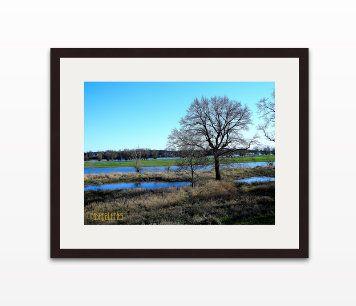 Foto Wasser. Abstrakte Kunst. Baum