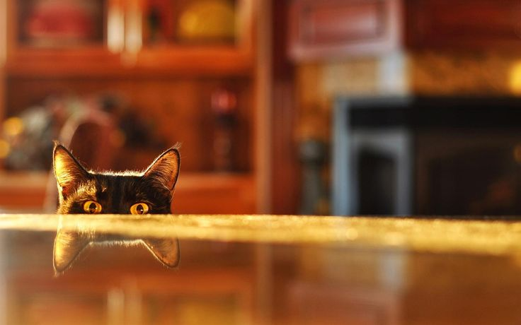 1680x1050-cat-peeking-over-table.jpg