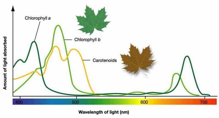 spettro di assorbimento nel visibile di clorofille e carotenoidi