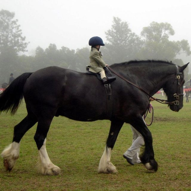 Forget ponies, all little kids need a draft horse!