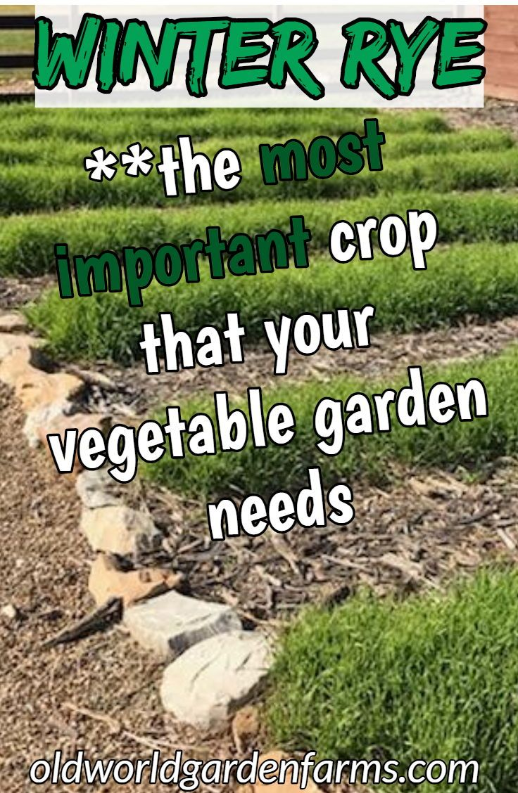 The Most Productive Fall Vegetable Crop You Will Ever Plant