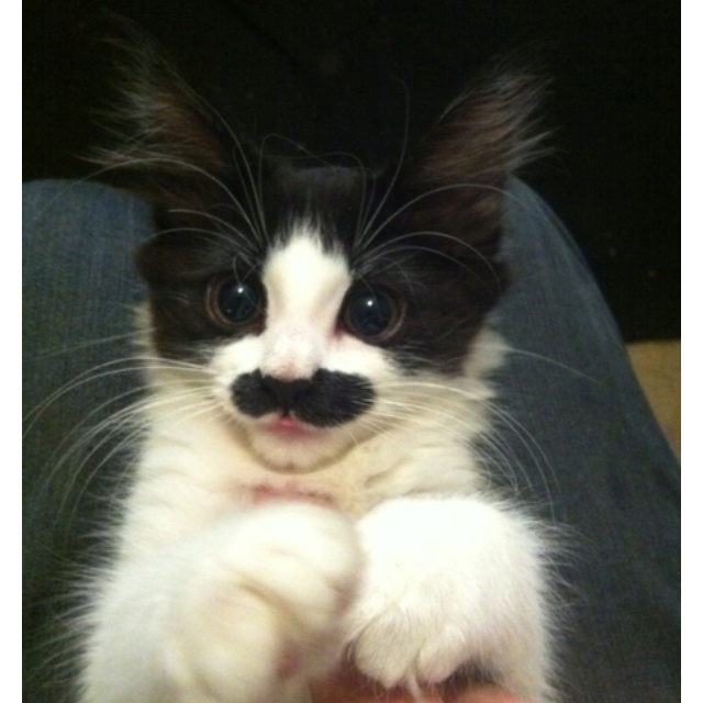 I want the kitty with a  moustache.