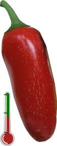 Pimentas Art | Jalapeño - 40 Sementes de pimenta Jalapeño *Frete Grátis*