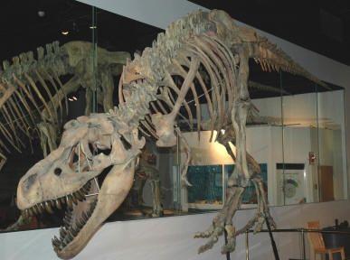Arizona Museum of Natural History - Mesa, AZ - Kid friendly activity reviews - Trekaroo