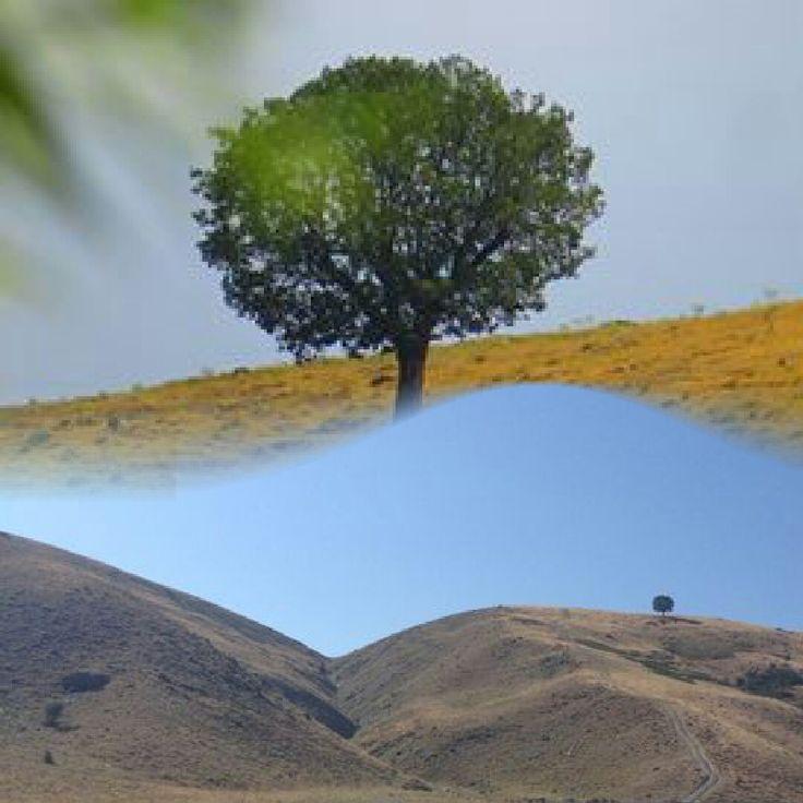 Bizim ağaç :) esasında çok uzakta!