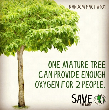 Random fact 101 help us plant more trees going green for Facts about going green
