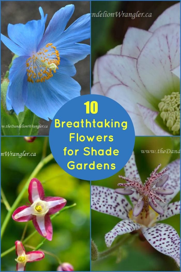 best 25 shade garden ideas on pinterest shade plants shade garden plants and shade flowers perennial - Shaded Flower Garden Ideas