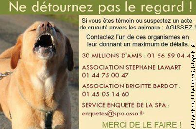 Si vous êtes témoin d'un acte de cruauté envers les animaux : AGISSEZ !