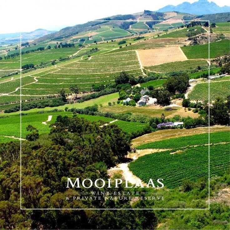 Mooiplaas Wine Estate | Catering & food, Venues & accommodation