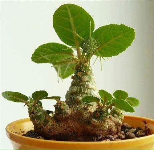 Bonsai Haus 121 best bonsai images on bonsai trees bonsai plants