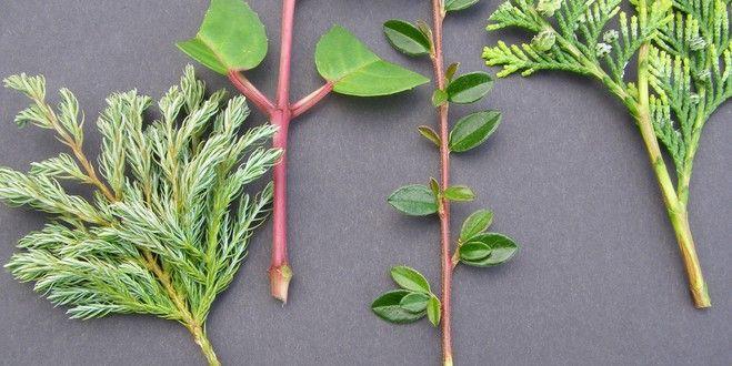 Bouturer, c'est presque magique au mois d'août ! A partir d'un morceau de tige soigneusement choisi et préparé, on obtient sans effort au bout de quelques semaines une nouvelle plante enracinée. Et le plus magique dans tout cela, c'est que le bébé bouture est une véritable « photocopie » de la plante-mère ! Petite liste d'arbustes à bouturer maintenant !! http://www.jardipartage.fr/liste-bouture-ete/