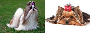 Resultado de imagen para peinados perros shitzu