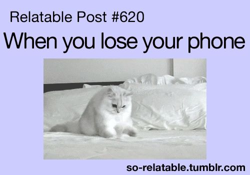 gif cat LOL funny gifs animals funny gif true true story kitten i can relate so true relatable i hate that