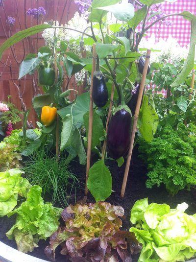 Les fruits , légumes et aromates parfais pour un mimi potager sur son balcon en ville ...