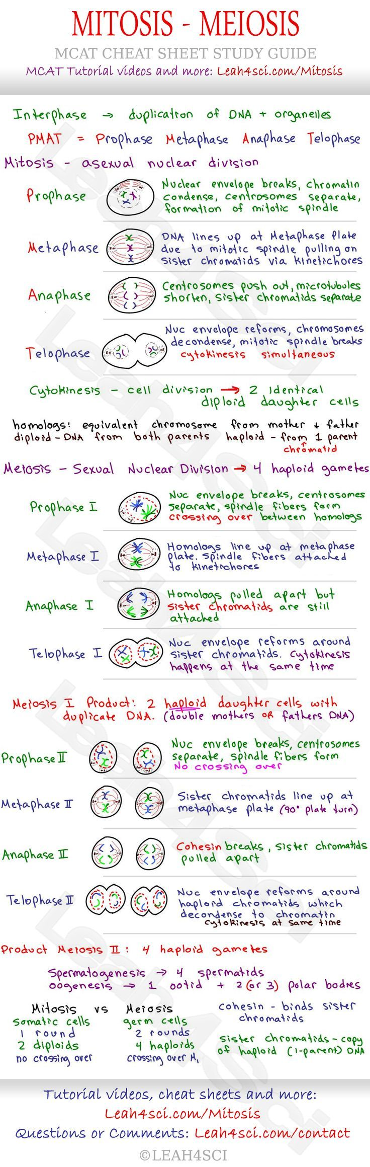 Mitosis and Meiosis MCAT Cheat Sheet Study Guide - learn what happens in each step: Prophase, Metaphase, Anaphase, Telophase and how they all tie together