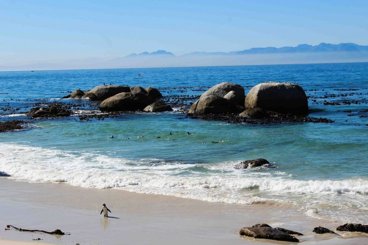 waddle like a penguin, Boulders beach, Cape Town