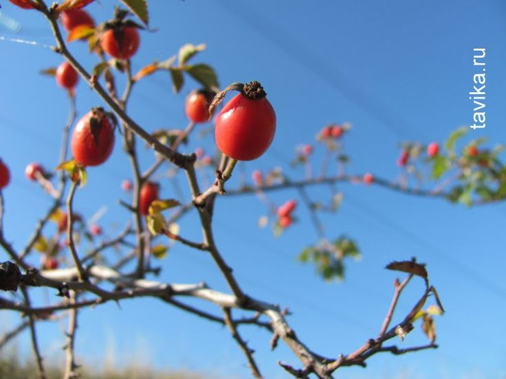 Почему деревья осенью теряют листья, но не сбрасывают ягоды? Занятие для детей по ботанике