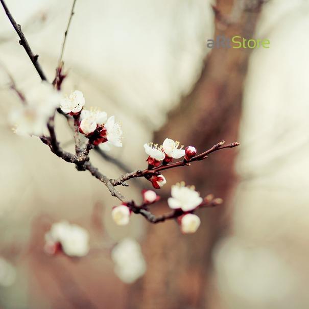 Jarná fotosúťaž