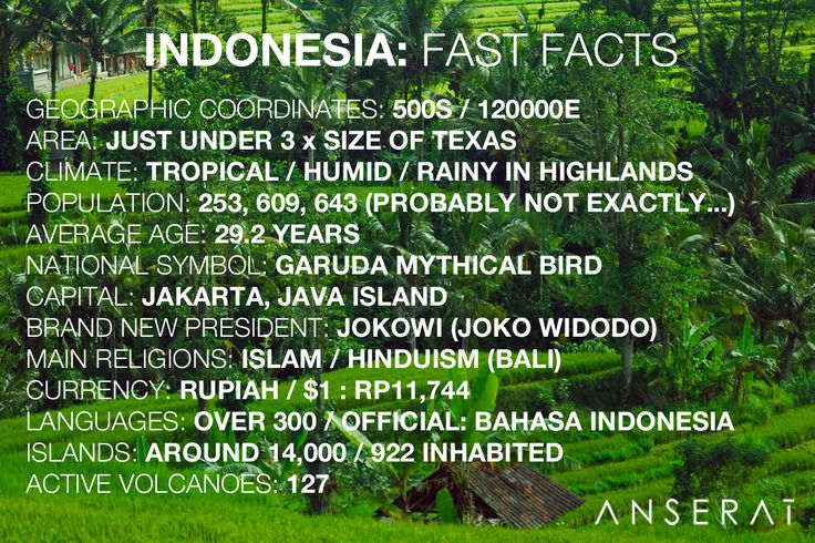 Indonesia fast facts infographic // debut sourcing trip for Anserai // www.anserai.com