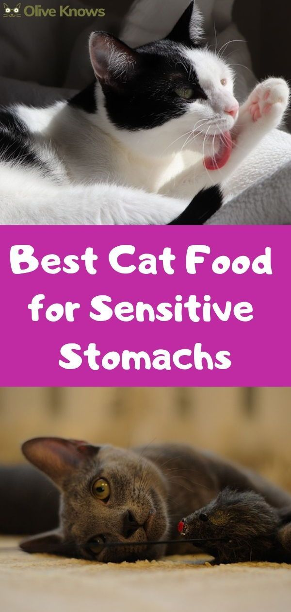 Best Cat Food For Sensitive Stomachs Your Cat Needs Oliveknows Sensitive Stomach Cat Food Best Cat Food Sick Cat
