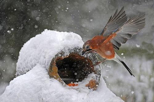 beautiful bird winter ndash - photo #33