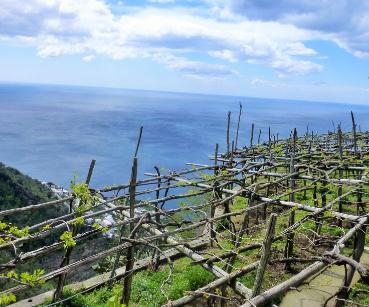 Wine making Amalfi Coast style