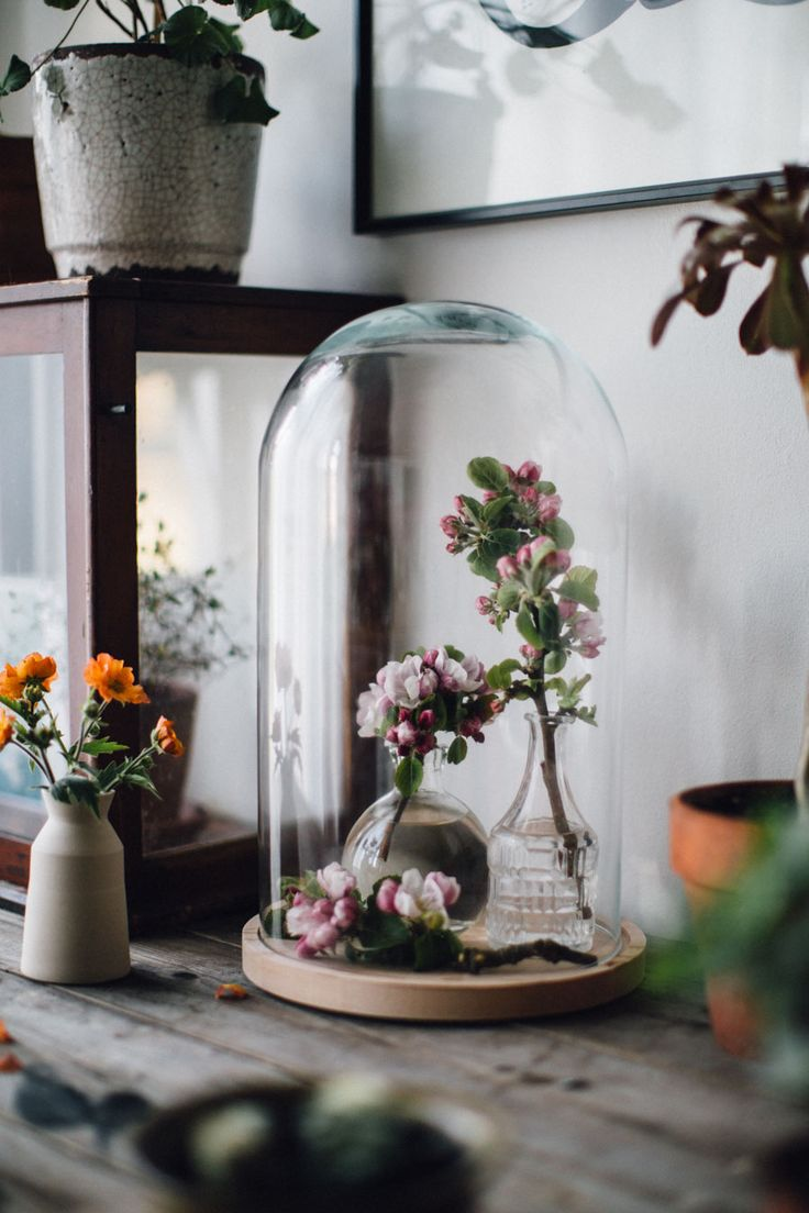 Cox and Cox Glass Display dome~Image © Lobster & Swan.